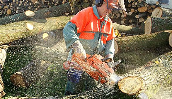Ein Holzarbeiter mit Motorsäge zerlegt einen Baumstamm © Bergringfoto, Fotolia.com