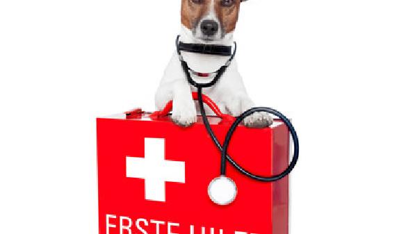 Hund beugt sich über einen erste Hilfe Koffer und trägt ein Stethoskop um den Hals © Javier brosch, stock.adobe.com